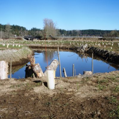 Ohop winter 2010, plantings.