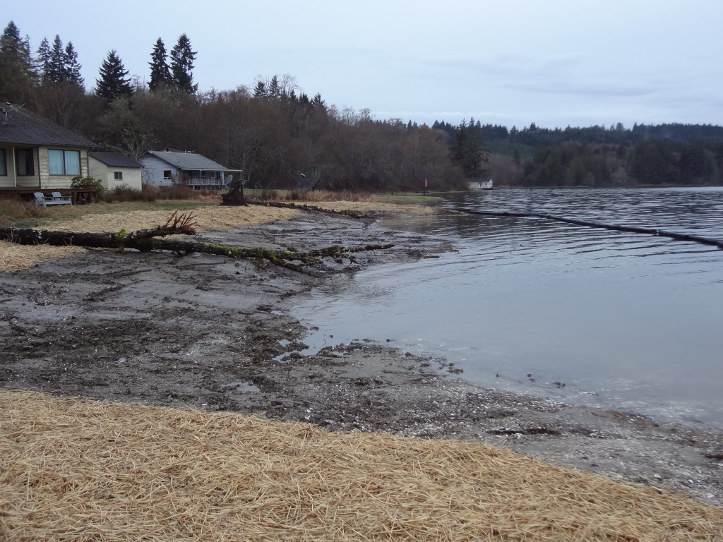 View of the site just after removal of the bulkhead. The tide is moving into area it has not occupied for several decades.