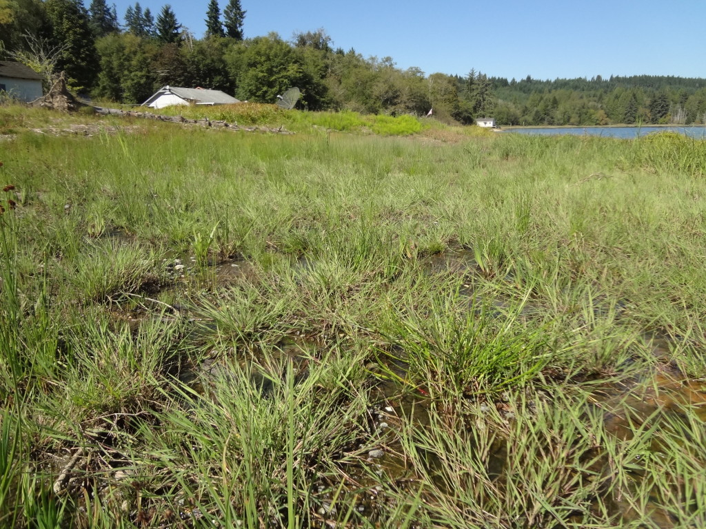 A close up view of recently populated wetland plant species.