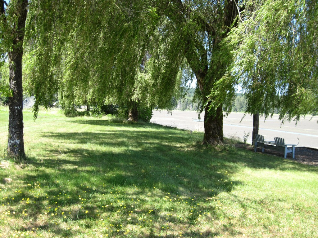 Another view of the yard area proposed for shoreline enhancement