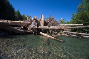 Greenwater logjam water2
